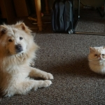 Lolly and Loki - Copy